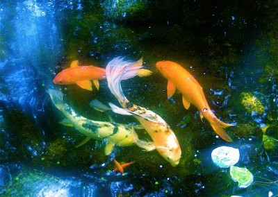 custom-built-koi-pond